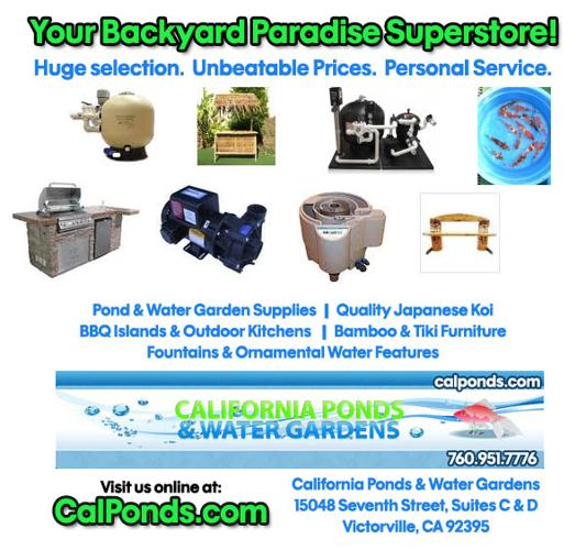 Dainichi koi food pond supplies lowest price for sale in for Pond stuff for sale